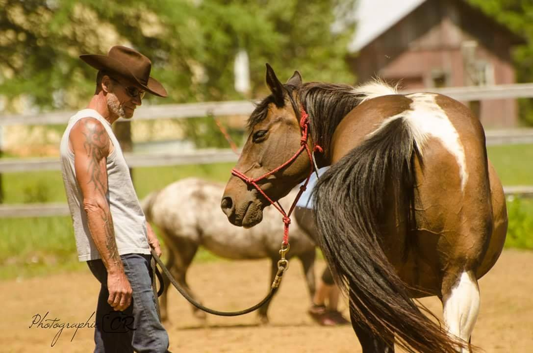 Homme regardant son cheval