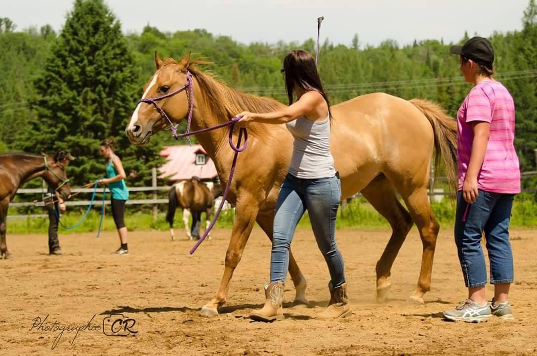 Étudiante apprenant le travail au sol avec chevaux