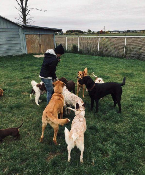 Plusieurs chiens dans la cours