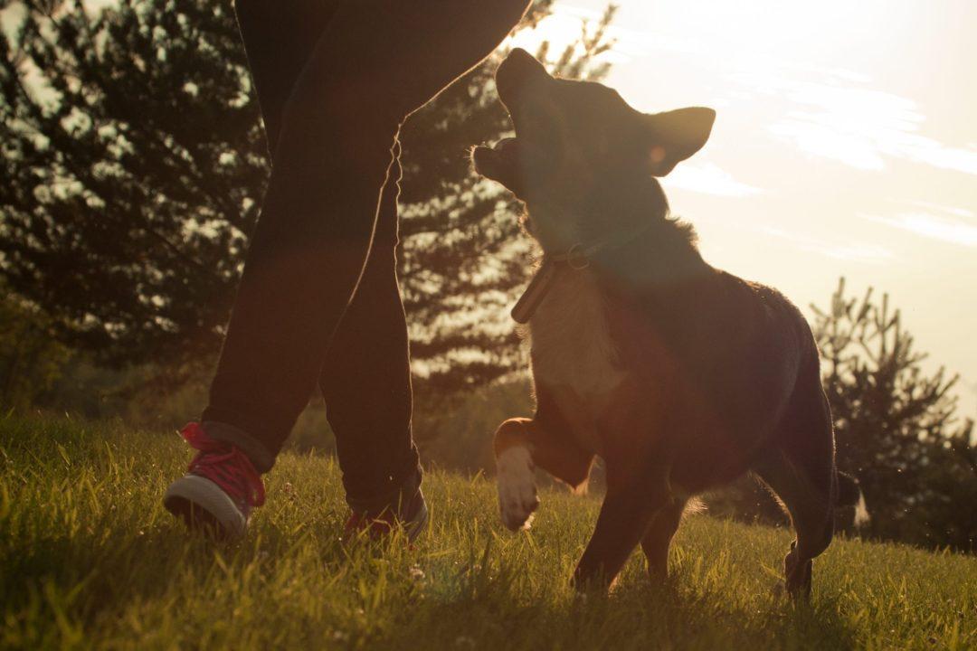 Chien et maitre dans le champ durant le coucher de soleil