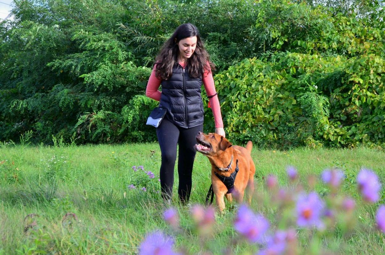 Promenade dans le champ avec son chien